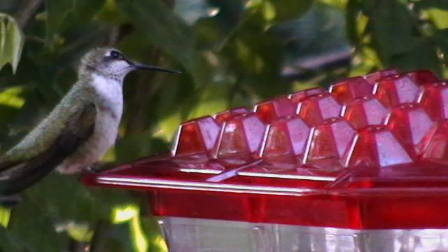 Best  Hummingbird Food